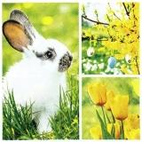 Hase, Tulpen & bunte Eier am Osterstrauch - Rabbit, tulips & colorful eggs on the Easter shrub - Lapin, tulipes et œufs colorés sur l arbuste de Pâques
