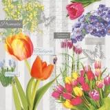 Hyazinthen, Primeln, Schachblumen  & Tulpen - Hyacinths, primroses, chess flowers & tulips - Jacinthes, primevères, fleurs d échecs et tulipes