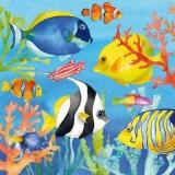 schöne Unterwasserwelt - beautiful underwater world - beau monde sous-marin