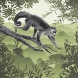 Affe klettert auf Baum - Monkey climbs on tree - Singe grimpe sur un arbre