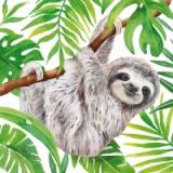 niedliches Faultier hängt ab - cute sloth hangs - jolie paresse se bloque