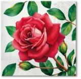 schöne große rote Rose - beautiful big red rose - belle grosse rose rouge