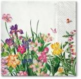 schöne bunte Wiesenblumen - beautiful colorful meadow flowers - fleurs de prairie colorées