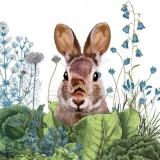 Häschen auf der Wiese - Bunny in the meadow - Lapin dans le pré