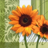 2 Sonnenblumen - 2 sunflowers - 2 tournesols