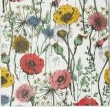 bunte Mohnblumenwiese und verschiedene andere - colorful poppy meadow and various others - pré pavot coloré et divers autres