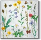 Bienen & Schmetterlinge besuchen Klee und andere Blumen - Bees & butterflies visit clover and other flowers - Abeilles et papillons visitent le trèfle et d autres fleurs