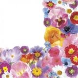 Frühlingsblumen Rahmen - Spring flowers frame - Cadre de fleurs de printemps
