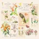 Orchideen, Schmetterlinge & Geschriebenes - Orchids, Butterflies & Written - Orchidées, Papillons & Ecrits