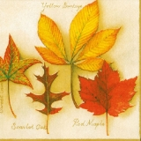4 verschiedene Laubblätter - 4 different leaves - 4 feuilles différentes