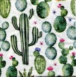 Kakteen - Cacti - Cactus