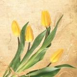 ein Haufen gelber Tulpen - a bunch of yellow tulips - un bouquet de tulipes jaunes