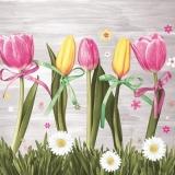 Rosa & Gelbe Tulpen - Pink & yellow tulips - Tulipes roses et jaunes