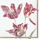 Tulpen - tulips - tulipes