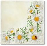 ein Haufen Margeriten - a bunch of daisies - un tas de marguerites