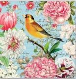 2 wunderschöne Vögel besuchen duftende Blüten, Pfingstrosen & Tulpen 2 beautiful birds visit fragrant flowers, peonies & tulips - 2 beaux oiseaux visitent des fleurs parfumées, des pivoines et des tul