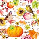 Zwei Vögel haben Herbstfest - Two birds have autumn festival - Deux oiseaux ont un festival d automne
