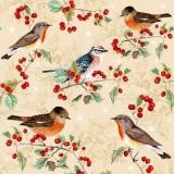 5 Vögel auf Ilexzweigen - 5 birds on Ilex branches - 5 oiseaux sur des branches d Ilex
