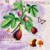 Fruchtfeigen, Schmetterling & Geschriebenes - Fruit figs, butterfly & written - Fruits figues, papillon & écrit