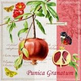 Granatapfel, Schmetterlinge & Geschriebenes - Pomegranate, Butterflies & Written - Grenade, Papillons & Ecrits