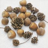 Eicheln & Zapfen - Acorns & cones - Glands et cônes
