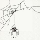 Spinne & Spinnennetz - Spider & cobweb - Araignée & toile de araignée