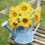 Sonnenblume in einer Gieskanne auf einer Holzbank - Sunflower in a watering can on a wooden bench - Tournesol dans un arrosoir sur un banc en bois