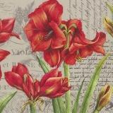 schöne Amaryllis & Geschriebenes - beautiful Amaryllis & Written - belle Amaryllis & écrite
