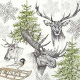 winterliche Tierwelt - winter wildlife - la faune de hiver