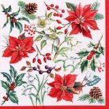 Weihnachssterne, Zapfen & anderes - Christmas stars, cones & other - Étoiles de Noël, cônes et autres