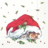 2 süsse Katzen schlummern unter einer Weihnachtsmütze - 2 cute cats are sleeping under a Santa hat - 2 chats mignons dorment sous un bonnet de Noel