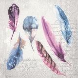 Federn & Geschriebenes - Feathers & written - Plumes et écrit