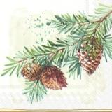 Zapfen & Geäst - Cones & branches - Cônes et branches