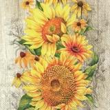 Sonnenblumen - sunflowers - tournesol