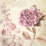 wunderschöne Hortensie - beautiful hydrangea - belle hortensia