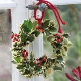 Ilex Kranz - Ilex wreath - Couronne Ilex