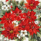 Weihnachtsstern & Ilex - Poinsettia & Ilex - Poinsettia & Ilex