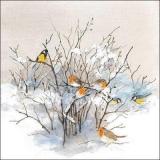 Rotkehlchen & Meisen sitzen im Baum  an einen schönen Wintertag - Robins & tits are sitting in the tree on a beautiful winter day - Robins et mésanges sont assis dans l arbre par une belle journée d h