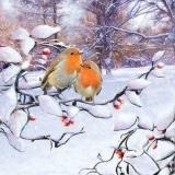 Rotkehlchen auf einen Zweig - Robins on a branch - Robins sur une branche