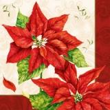 schöne Weihnachssterne - beautiful christmas stars - belles étoiles de noël