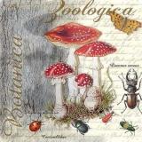 Fliegenpilze & Käfer - Toadstools & beetles - Champignons et coléoptères