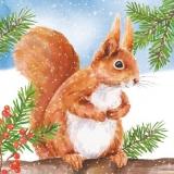Squirrel in winter - Squirrel in winter - Écureuil en hiver