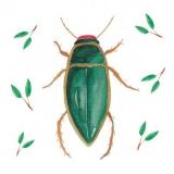 Käfer - Beetle - coléoptère