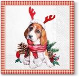 Weihnachtshund - Christmas dog - chien de Noël
