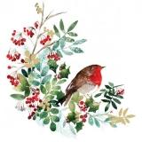 Rotkehlchen auf Winterzweigen - Robins on winter branches - Robins sur les branches d hiver