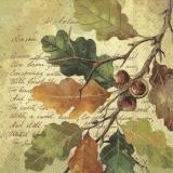 bunter Eichenzweig & Geschriebenes - colorful oak branch & written - branche de chêne colorée et écrite