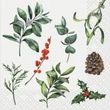 Misteln, Zapfen, Ilex & grüne Zweige - Mistletoes, cones, Ilex & green branches - Mistletoes, cônes, Ilex et branches vertes