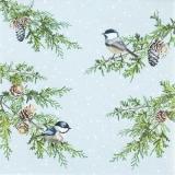 Vögel auf winterlichen Zweigen - Birds on winter branches - Oiseaux sur branches d hiver