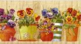 Stiefmütterchen in Blumentöpfen - Pansies in Flowerpots - Pensées dans les pots de fleurs