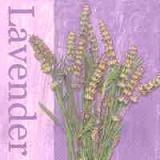 Hübscher Lavendel - Pretty Lavender - jolie lavande